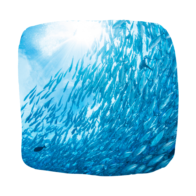 Омега-3, рыба